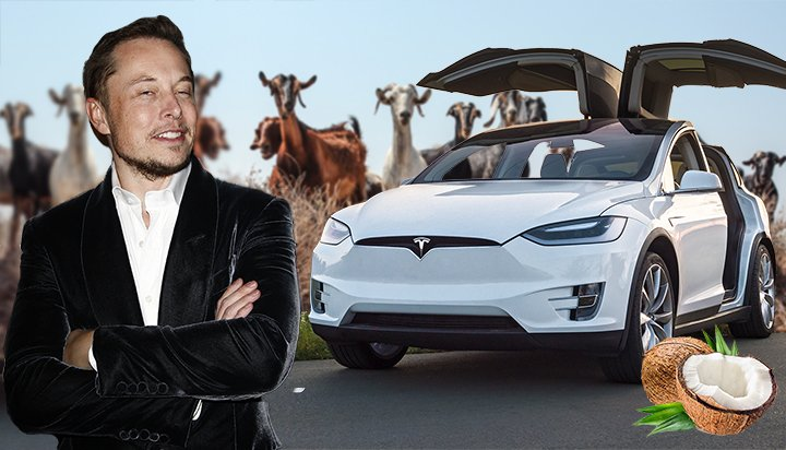 What do coconuts, goats and flatulence have to do with Tesla?!